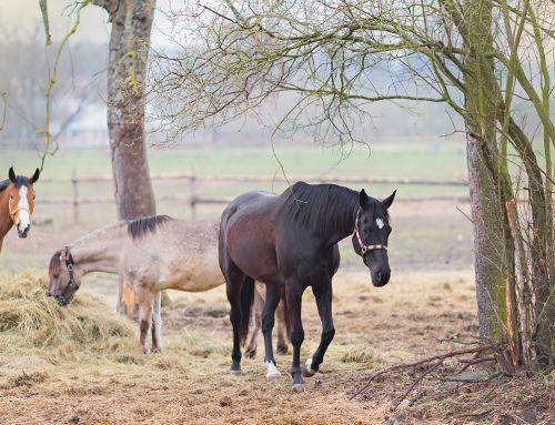 Najlepsza pasza dla mojego konia – czyli jaka?